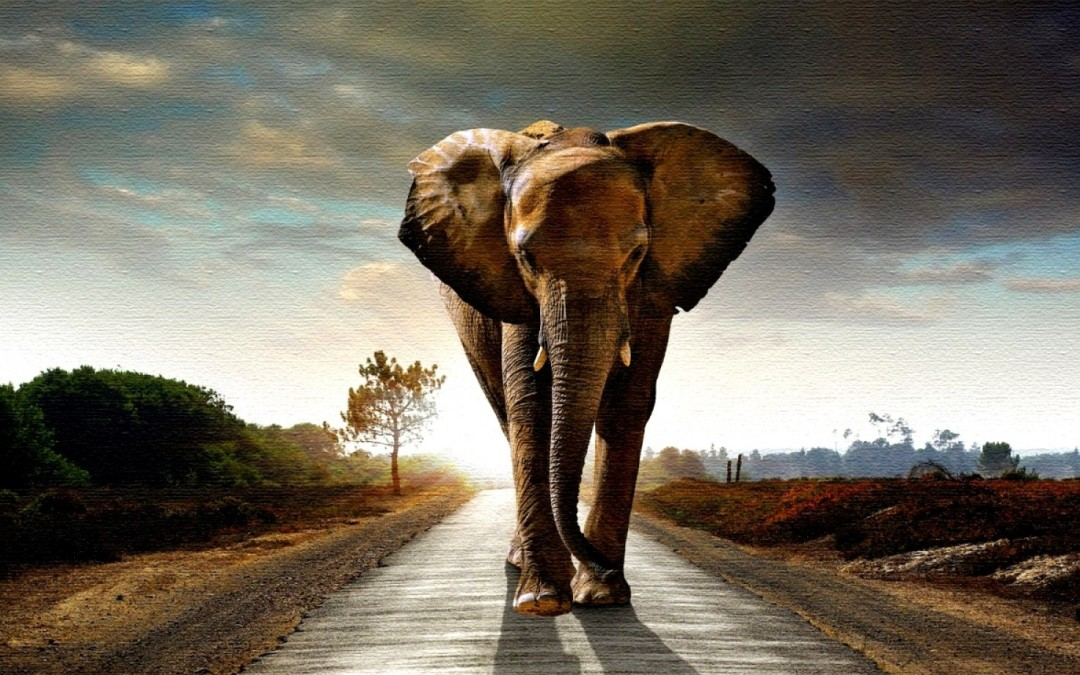 Korak slona